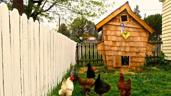 """This image taken on April 20, 2013 shows a """"Crooked Coop"""" in Clinton, Wash. that is reminiscent of a fairy tale house of Dr. Seuss. Designer chicken coops are becoming a new kind of yard art and many poultry raisers are being upfront about it -- using the outbuildings as extensions of their homes. A chicken coop can be anything from technical to aesthetic to wacky as long as it functions well for the birds. (AP Photo/Dean Fosdick)"""