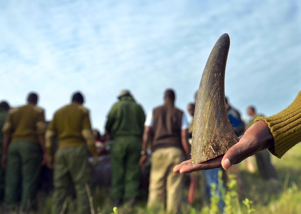 South African judge lifts domestic ban on rhino horn trade