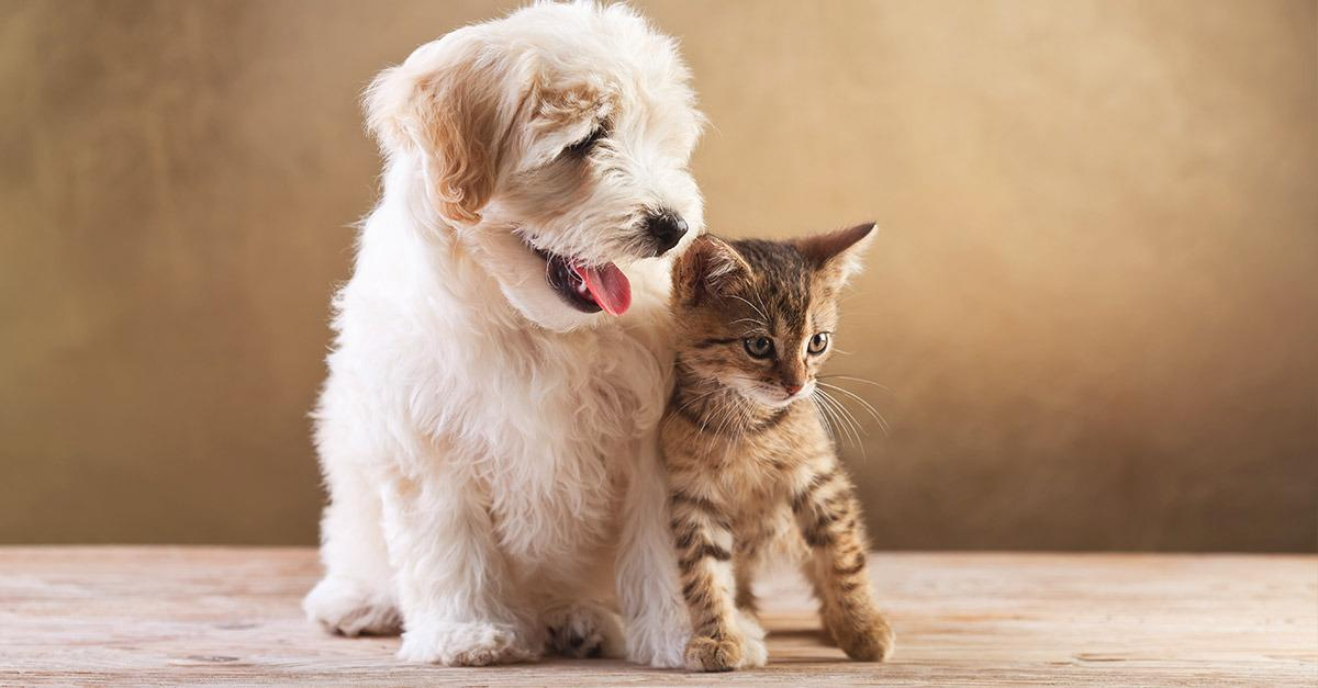 Spoil Your Pets with These Deals