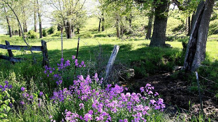 This May 10, 2009 photo shows phlox daisies which are among the many meadow flowers that can thrive in traditional landscapes -- even in city settings. Prairie garden combinations include flowers, shrubs and trees. They require little attention, add year-'round color and interest and provide wildlife-friendly habitat. (AP Photo/Dean Fosdick)