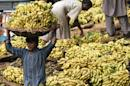 Scientists find that the black spots on old banana peels may unlock a faster, easier diagnosis of human skin cancer