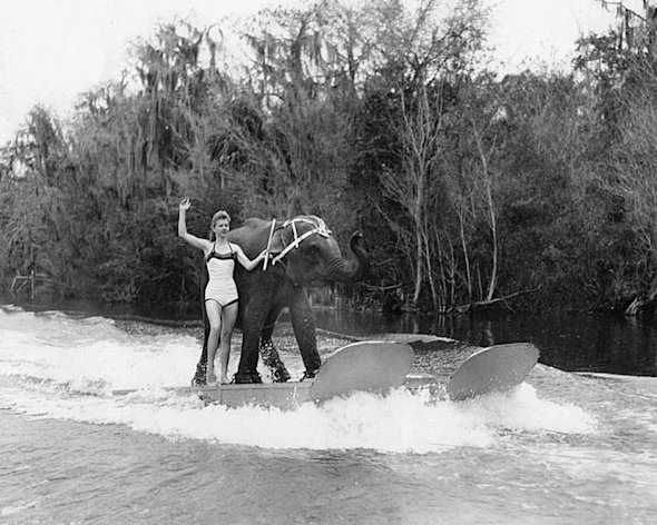 In this undated 1958 photo provided courtesy of Liz Dane, Dane is shown performing her act with Queenie the water skiing elephant. The Valdosta Daily Times reports that 59-year-old Queenie was euthanized Monday, June 2, 2011, after her health deteriorated.