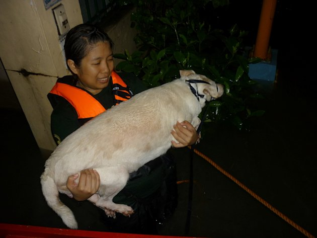 PAWS--Cha-Laxamana-with-a-rescued-stranded-dog-in-Riverside--Pasig-jpg_045353 - About THE PHILIPPINE ANIMAL WELFARE SOCIETY - Directory Philippines