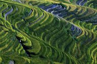 This file photo shows rice terraces in a mountainous area in China's southwest Gangxi province, pictured in 2003. As economic giant China ploughs ahead with modernisation and industrialisation, small-scale farmers and producers are creating pockets of resistance by going back to their roots