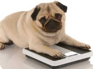 Is your pet overweight?