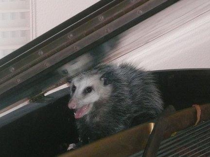 They're hiding in your piano