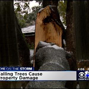 Falling Trees Causing Property Damage