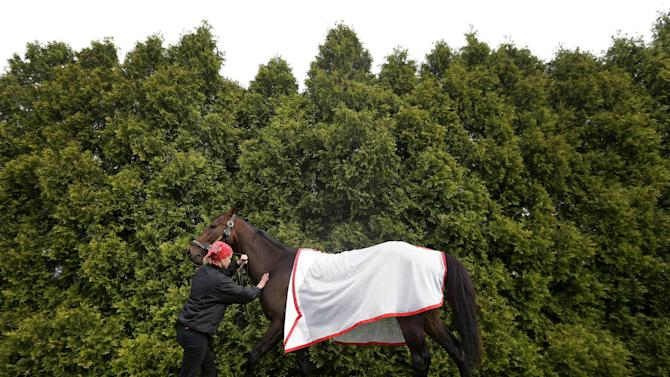 Exercise rider Jennifer Patterson stands with Kentucky Derby winner Orb as he grazes at Pimlico Race Course in Baltimore, Wednesday, May 15, 2013. The Preakness Stakes horse race is scheduled to take place May 18. (AP Photo/Patrick Semansky)