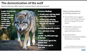 The domestication of the wolf