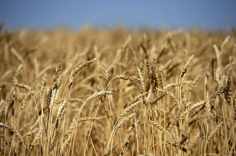 Farm issues could scupper free trade deal with EU: U.S