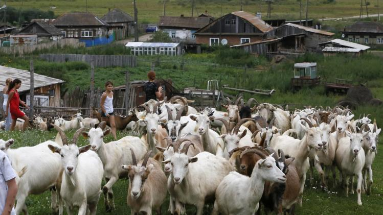 Zoya Lipnyagova's children shepherd goats on a pasture near their house farm in the village of Kluchi