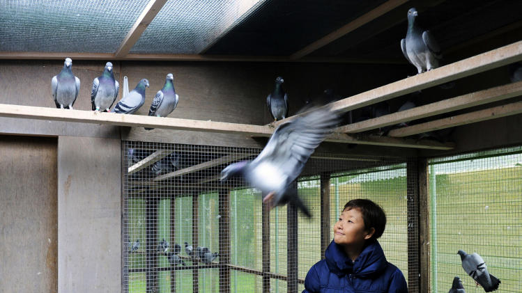 In this photo taken Wednesday, Jan. 12, 2011, China's Yi Minna, the Chief Operating Officer at the PiPa pigeon auction house which organized the Roosen sale, watches pigeons at Pigeon Paradise in Knesselare, Belgium. In one month, two auctions of Belgian racing pigeons have set one record after another, confirming Belgium as the age-old prime breeding hub and China as pigeons' new home of conspicuous consumption. It also highlights the past and future in the sport. (AP Photo/Geert Vanden Wijngaert)