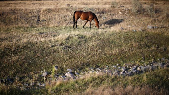 Horse grazes next to a dry stream bed near Pine Flat Lake in Fresno County