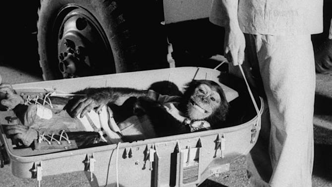 Chimps in space