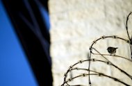 A bird rests on concertina wire outside the 'Camp Six' detention facility in Guantanamo Bay, Cuba. The US government published for the first time Friday a list of 55 Guantanamo detainees cleared for release but still held amid challenges identifying a willing host country or concerns about sending them home