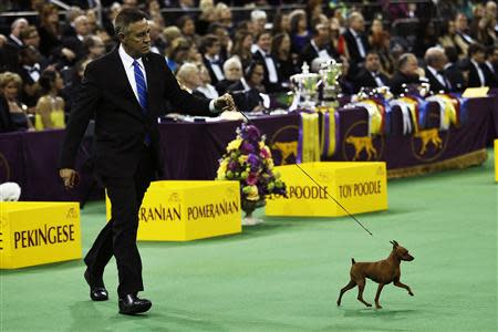 2014 Westminster Kennel Club Dog Show in New York, February 10, 2014