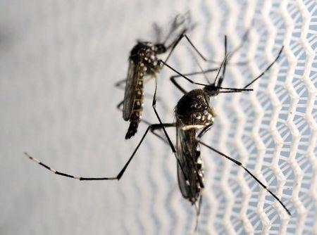 Finland has had two cases of Zika virus: official