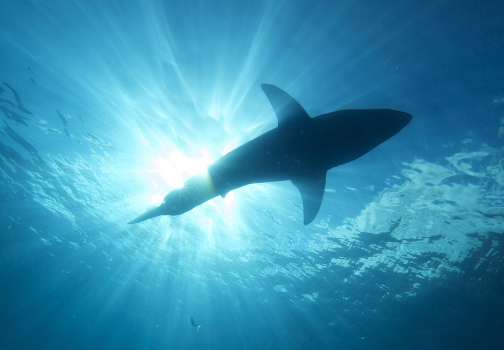Drones are now being used to prevent shark attacks off the coast of Australia