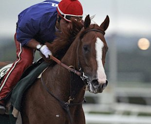 California Chrome, with exercise rider Willie Delgado in the saddle, gallops in the rain at Belmont Park. (AP)