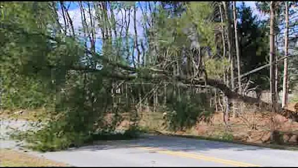 Toppled tree cuts power in Bear, Delaware