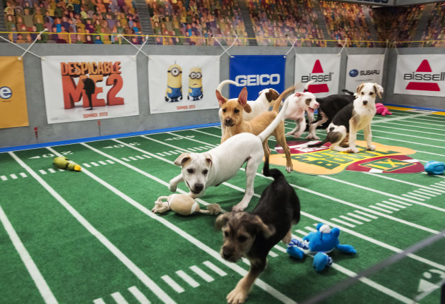 "<p>               This undated publicity photo provided by Animal Planet shows dogs playing on the field during ""Puppy Bowl IX,"" in New York. The ""Puppy Bowl,"" an annual two-hour TV special that mimics a football game with canine players, made its debut eight years ago on The Animal Planet. Dogs score touchdowns on a 10-by-19-foot gridiron carpet when they cross the goal line with a toy. (AP Photo/Animal Planet, Keith Barraclough)"