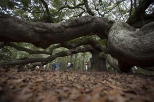 Tourists take photos around the trunk of the Angel …