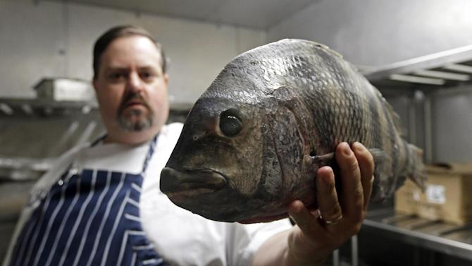 """In this photo taken Thursday, June 13, 2013, James Clark, Executive Chef at Carolina Crossroads Restaurant holds a fresh sheepshead fish ready for preparation in his kitchen in Chapel Hill, N.C.  Chefs such as Clark go beyond the usual recommendation to eat small, lower-food-chain fish like sardines, and instead delve full force into little-known local catches that many anglers regard as nuisance or """"trash"""" fish.  (AP Photo/Gerry Broome)"""