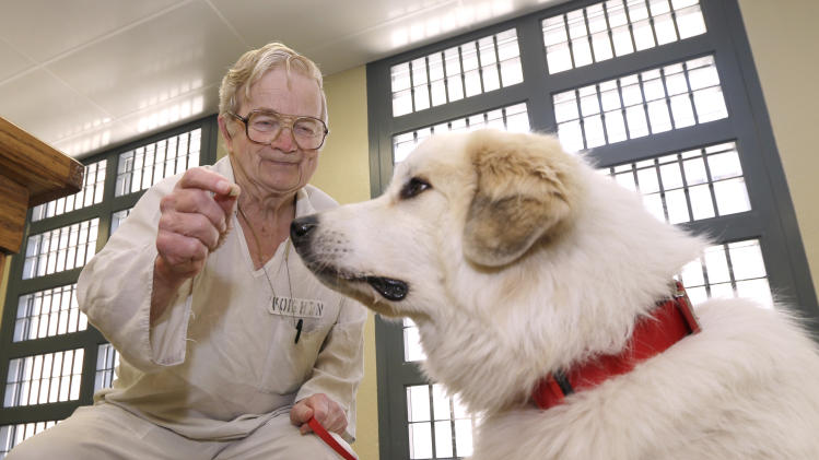 In this photo taken Wednesday, June19, 2013, at Arkansas Department of Correction Ouachita River Unit in Malvern, Ark., inmate Norman Voigt offers a treat to Napoleon, a great Pyrenees, during a dog training class in the Paws in Prison program at the prison. (AP Photo/Danny Johnston)