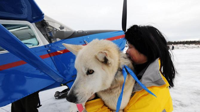 Kidron Flynn carries a dropped dog to an Iditarod Air Force plane during the Iditarod Trail Sled Dog Race, Wednesday, March 6, 2013, at Nikolai Airport in Nikolai, Alaska. (AP Photo/The Anchorage Daily News, Bill Roth)  LOCAL TV OUT (KTUU-TV, KTVA-TV) LOCAL PRINT OUT (THE ANCHORAGE PRESS, THE ALASKA DISPATCH)