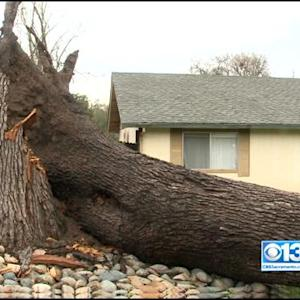 Storm Brings Down Massive Tree In Fair Oaks