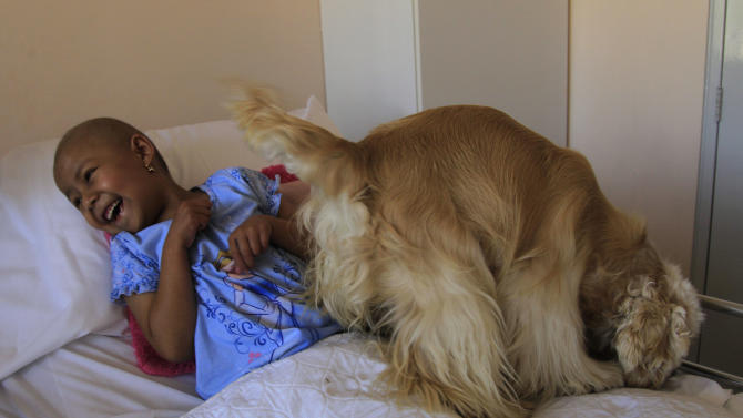 In this July 25, 2012 photo, Paola laughs as Lancelot, an American cocker spaniel, walks on her bed at the SOLCA hospital in Quito, Ecuador. The dog's owner says her dogs are used every Wednesday to cheer up the most discouraged of the patients. Hospital workers began to notice that on Wednesdays fewer children had to be kept over because of problems after chemotherapy. Doctors found that youngsters' adrenaline levels rose from being with the dogs, boosting their resistance to chemo's side effects. (AP Photo/Dolores Ochoa)