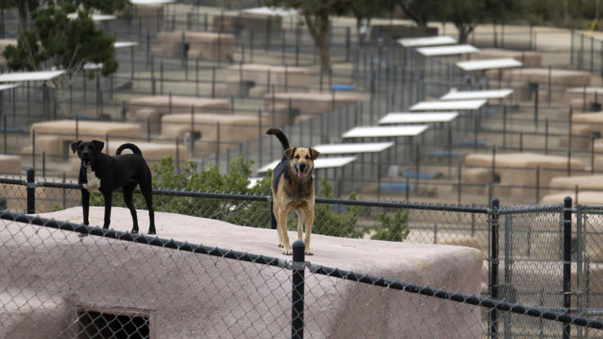 In this Aug. 29, 2013 photo, two dogs stand atop shelters, built of bales of straw, plywood and stucco, at Leo Grillo's DELTA (Dedication & Everlasting Love to Animals) Rescue complex in Acton, Calif. Nearly 35 years ago, Grillo thought he could get people to stop dumping dogs and cats in the forests and deserts of Southern California. After more than three decades, there is no end to the number of animals he finds discarded on the side of the road. Delta Rescue is now the largest no-kill, care-for-life sanctuary in the nation for abandoned pets, home to some 1,500 dogs, cats and horses with 50 employees, a state-of-the-art hospital with full-time veterinarian, and his own fire department. (AP Photo/Reed Saxon)
