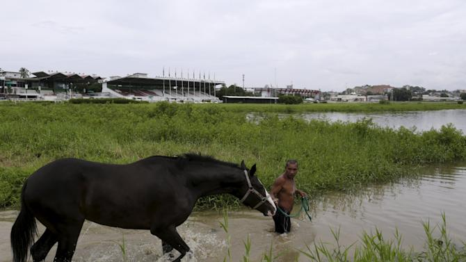 A groom brings a horse for exercise in a lake at the Hippodrome Presidente Remon (President Remon Racetrack) in Panama City