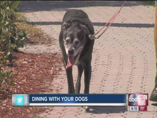 Pinellas Commissioners may allow doggy dining at restaurnats that qualify with outdoor seating