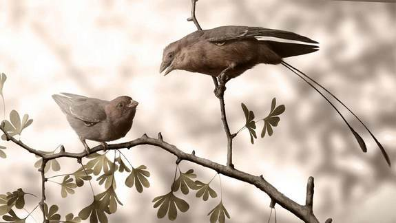 It's a Girl! Ancient Bird Was Ovulating Before Death