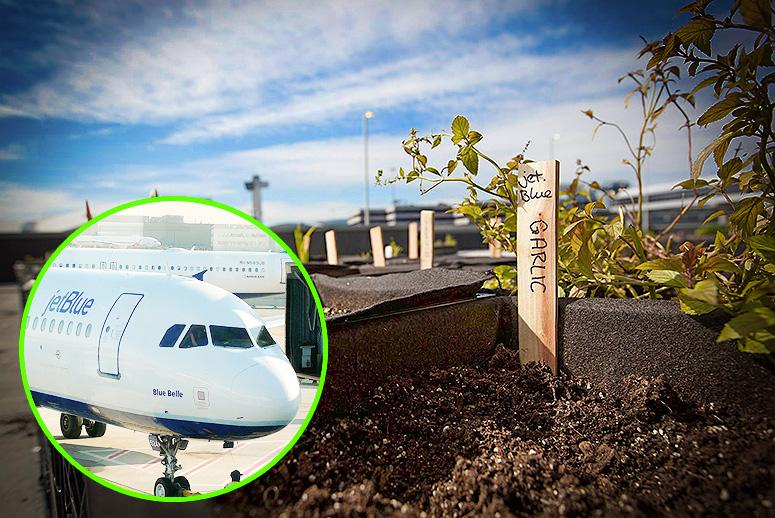 Urban Farming Is Now Flying a Flag at Major U.S. Airports