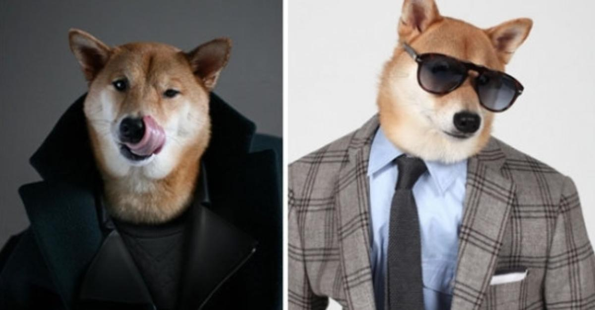 This Dog Is Taking The Internet By Storm