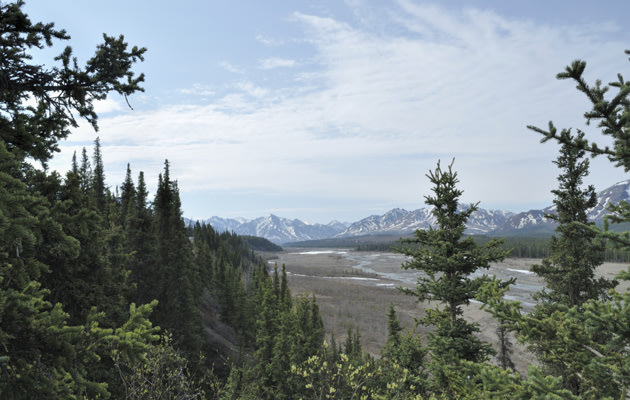 Toklat River Valley in Denali National Park (Thinkstock)