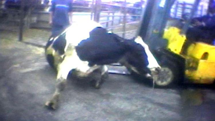 Bills seek end to farm animal abuse videos