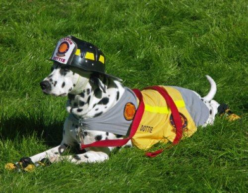 Train your Dog for Search and Rescue