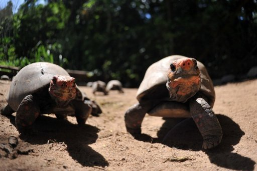 German palaeontologists have dug up the remains of nine turtle pairs that died while mating some 47 million years ago, sinking into poisonous waters while locked in a final embrace, a report said.