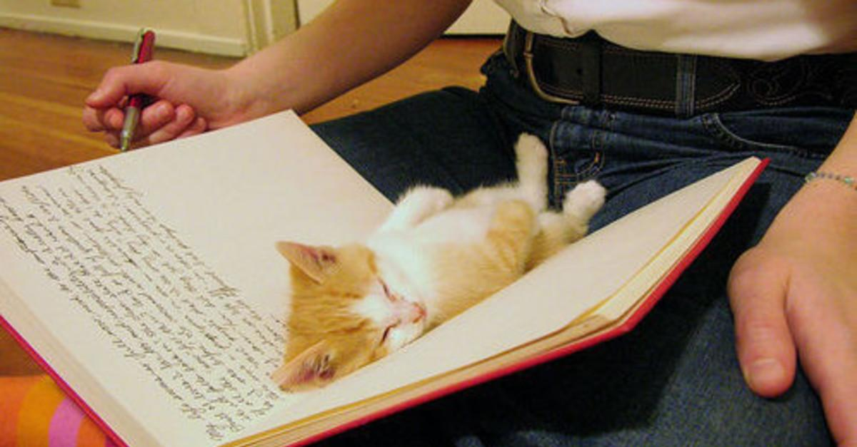 15 Pets Who Despite Your Nasty Reading Habit