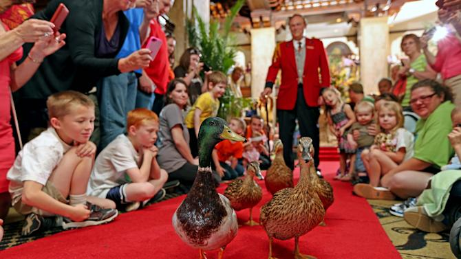 This undated photo provided by The Peabody Memphis shows ducks walking in The Peabody Memphis Hotel in Memphis, Tenn. The ducks live at the hotel and visitors are welcome to stop by to watch their twice-a-day parades through the lobby, one of a number of free things to see and do in and around Memphis. (AP Photo/The Peabody Memphis)