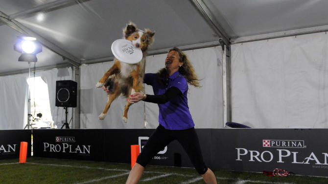 A Purina Pro Plan Performance Team trainers puts on a high-flying show during The Purina Pro Plan Canine Combine, on Wednesday, Jan. 30, 2013 in New Orleans, LA.  (Photo by Cheryl Gerber/Invision for Purina Pro Plan/AP Images)