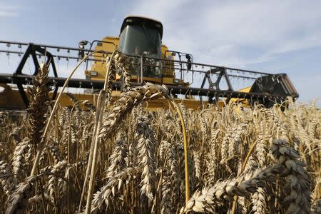 A French farmer drives his combine as he harvests wheat in a field in Oisy-le-Verger, near Douai, northern France