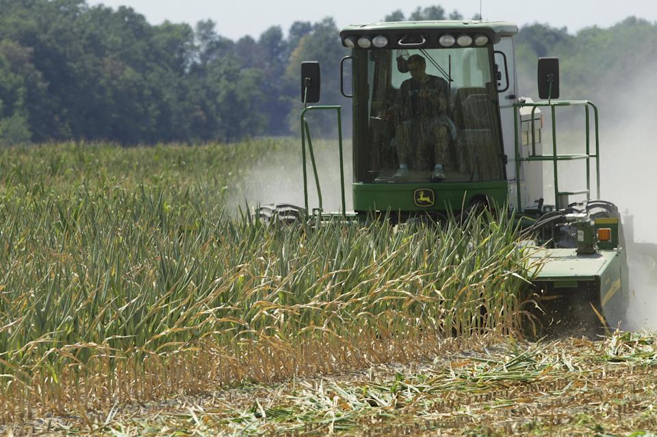 Steve Niedbalski chops down his drought and heat stricken corn for feed Wednesday, July 11, 2012 in Nashville Ill. Farmers in parts of the Midwest are dealing with the worst drought in nearly 25 years.  (AP Photo/Seth Perlman)