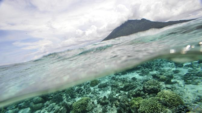A coral reef is pictured off Bunaken Island marine protected national park in Manado on May 13, 2009