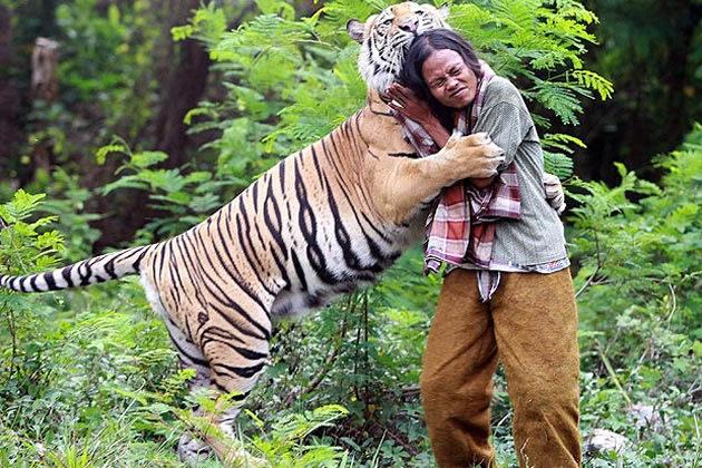 Urso Polar VS Tigre Siberiano 3011_tigre_mat_2