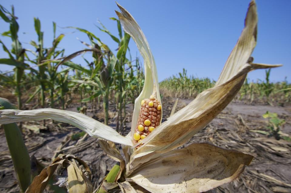 Record crop insurance payout stirs subsidy debate