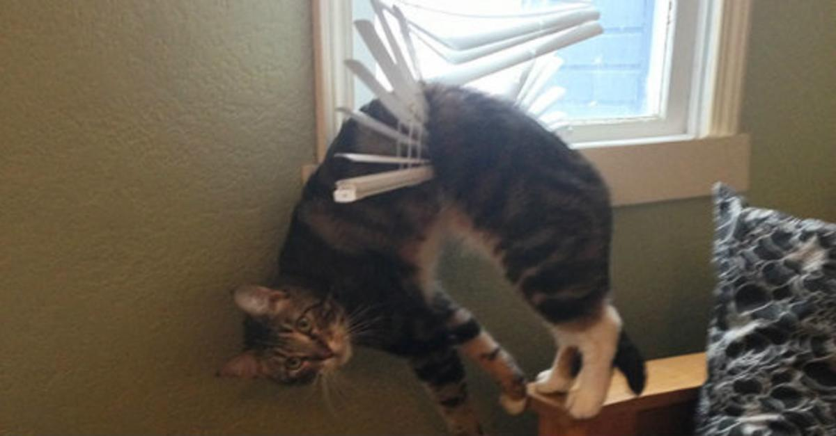 15 Animals Who Instantly Regretted Everything